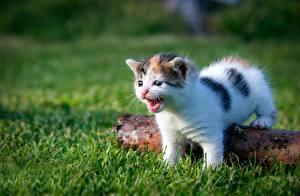 Обои для рабочего стола Кошки Котята Трава Белая животное
