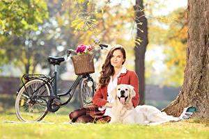 Фотография Собаки Золотистый ретривер Велосипеде Корзинка Шатенка Траве Сидящие Размытый фон девушка Животные