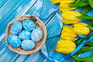 Обои Пасха Тюльпаны Яйца Гнезде цветок