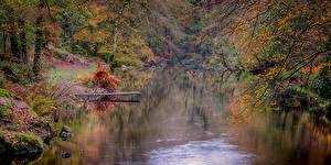 Фотография Англия Осень Реки Деревья Devon Природа