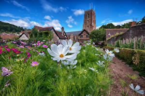 Обои Англия Сады Космея Башня Minehead Природа