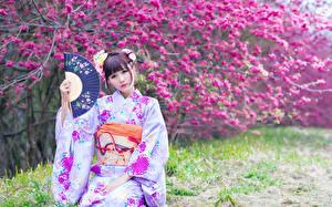 Фото Цветущие деревья Азиатки Размытый фон Кимоно Шатенки Веер Взгляд Japanese Девушки