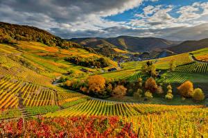 Фотография Германия Осень Виноградник Облачно Холмы Mayschoß