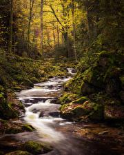 Фото Германия Леса Осенние Камни Бавария Ручей Мхом Black Forest Природа