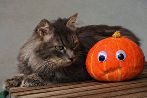 Фото Хеллоуин Коты Тыква