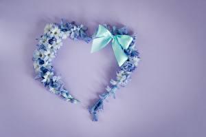 Фото Сердце Бантик Цветной фон