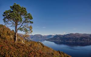 Картинка Норвегия Осенние Дерева Hardangerfjorden Природа