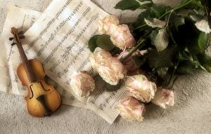 Обои для рабочего стола Ноты Музыкальные инструменты Скрипки Букеты Роза Цветы