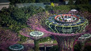 Обои Сингапур Парк Дизайна Кафе Пальма Сверху Skypark Природа