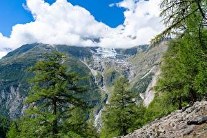 Фотографии Швейцария Горы Альпы Облако Ели Randa Природа