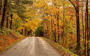 Картинки Америка Осень Лес Дороги Дерево Rose Hill, Virginia Природа