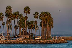 Картинки Америка Дома Побережье Калифорния Деревня Пальмы Shoreline Village Long Beach Города