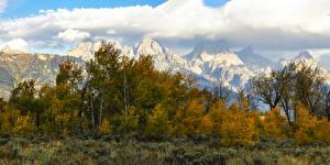 Картинки США Парки Осенние Горы Дерева Кустов Grand Teton National Park Природа