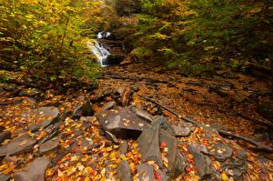 Фото США Парки Осень Камень Лист Ручеек Ricketts Glen Природа