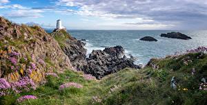 Картинки Великобритания Берег Маяки Море Уэльс Утес Трава Anglesey Природа