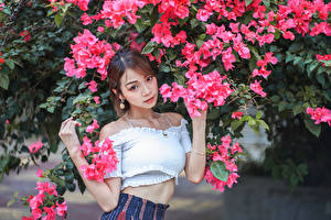 Обои Азиатки Цветущие деревья Поза Взгляд Шатенка молодые женщины