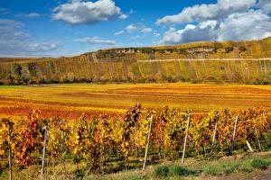 Фотографии Осенние Германия Поля Виноградник Холмы Кусты Baden-Wuerttemberg