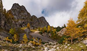 Обои Осень Словения Альп Утес Дерево Julian Alps
