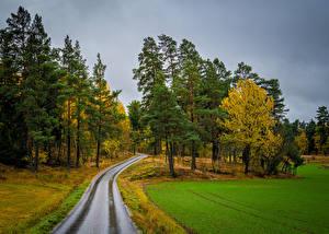Фотографии Осень Швеция Стокгольм Дороги Поля Дерева Skalhamra Природа