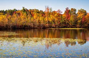Фотография Осенние США Озеро Лес Лист Beaver Lake Nature Center Природа