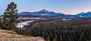 Фотография Канада Парки Гора Лес Реки Пейзаж Панорама Джаспер парк Alberta Природа