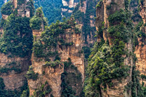 Фото Китай Парки Горы Скалы Дерево Zhangjiajie National Forest Park