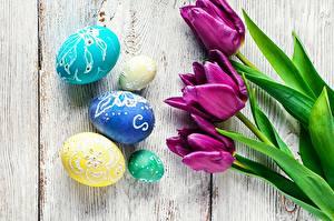 Фотографии Пасха Тюльпаны Яйца цветок