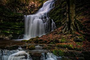 Картинка Англия Осенние Водопады Скала Листья Мох County Durham Природа