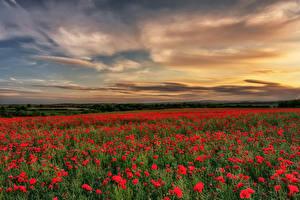 Картинка Англия Поля Рассвет и закат Маки Небо County Durham Природа