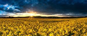 Картинка Поля Рассветы и закаты Германия Рапс Панорама Солнце Saxony, Upper Lusatia Природа