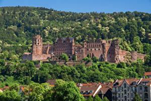 Обои Лес Замок Германия Heidelberg castle