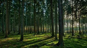 Обои Лес Деревья Мох Природа