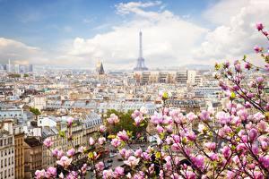 Фото Франция Весна Цветущие деревья Париж Эйфелева башня город
