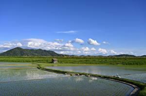 Фотографии Япония Поля Горизонта Rice field, Yamada, Iwate Prefecture Природа