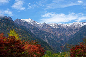 Фотография Япония Гора Мхом Ветка Каньон Kasagatake Mountain Природа