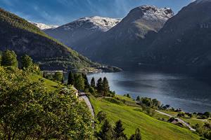 Фото Норвегия Гора Дерево Залива Aurland Природа