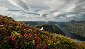 Обои Норвегия Горы Пейзаж Ягоды Облака Rogaland Природа