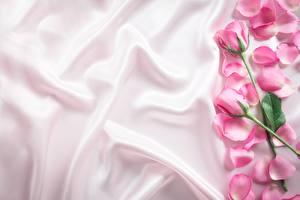 Картинки Розы Лепестки Ткань Шаблон поздравительной открытки цветок