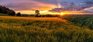 Картинка Швейцария Поля Рассветы и закаты Пейзаж Горизонт Солнце Лучи света Frauenfeld Природа