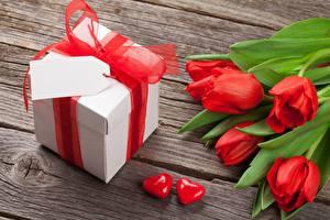 Фотографии Тюльпаны