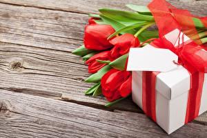 Обои Тюльпан Подарки Доски цветок