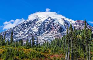 Фотографии Америка Парк Гора Ель Снегу HDR Mount Rainier National Park Природа