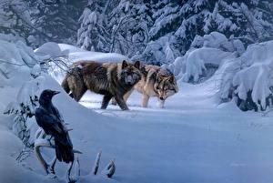 Картинки Волк Леса Зимние Ворона Рисованные 2 Снега животное