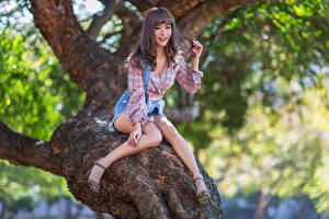 Фотографии Азиаты Улыбка Сидящие Ствол дерева Ног Шорт Рубашки девушка