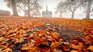 Фотографии Осенние Церковь Новая Зеландия Лист Туман Hawke's Bay, Pukehou, Christ Church Природа