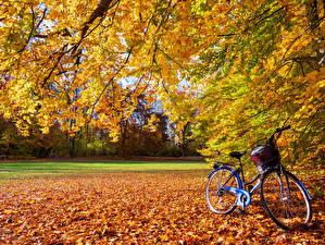 Фотографии Осень Лист Велосипед Ветвь Природа