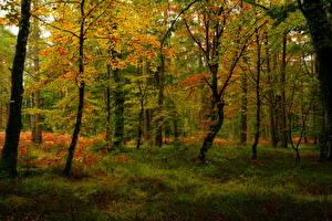 Фото Осень Леса Деревьев Природа