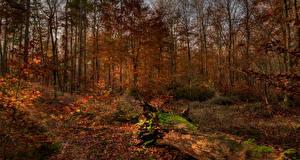 Фотографии Осень Леса Деревья Листва Природа
