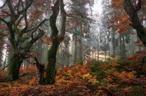 Фотография Осенние Лес Деревья Листва Природа