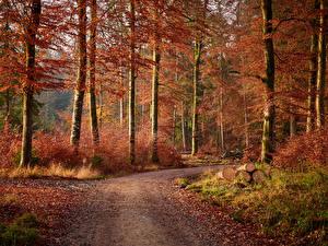 Картинка Осенние Лес Дерево Тропинка Бревно Лист Природа